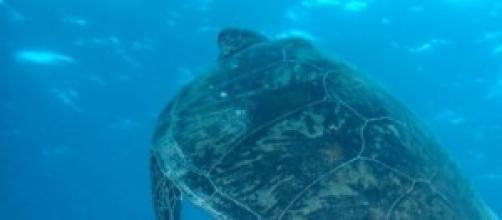 vacanze estate 2014. nelle barriere coralline