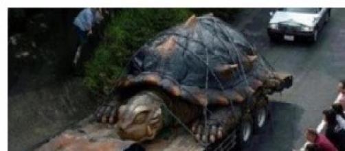 la tartaruga gigante fuoriuscita dall'Etna