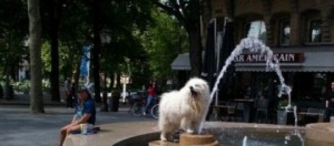 The dog play with fountain in A'dam