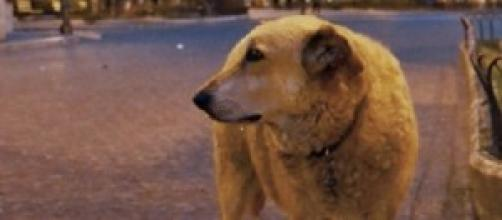 Italo, lo straordinario cane di Scicli