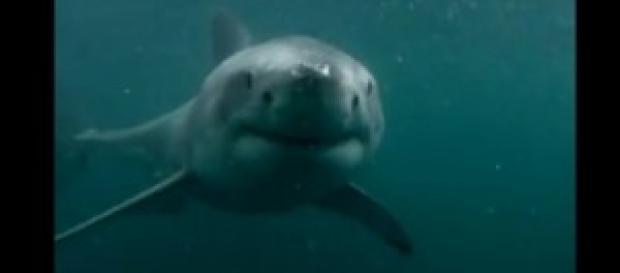 Tiburón sorprende a un joven al saltar al mar