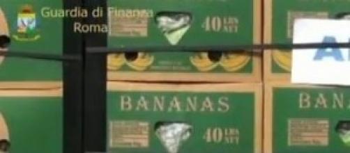 maxisequestro di coca nascosta fra le banane