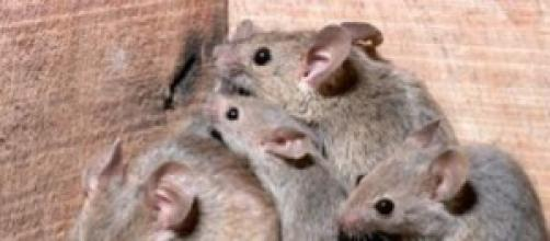 Rat Girl, alleva decine di topi