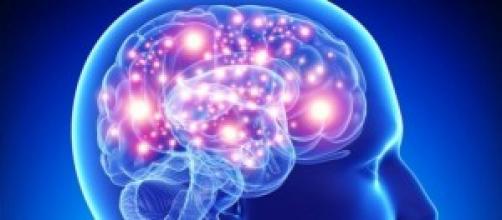 foto: i neuroni ricettori del cervello