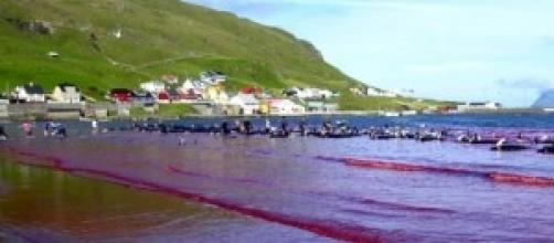 Cuerpos sin vida de delfines Calderón en Dinamarca