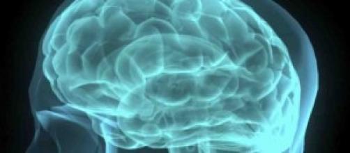 il cervello sano non ancora colpito da Alzheimer