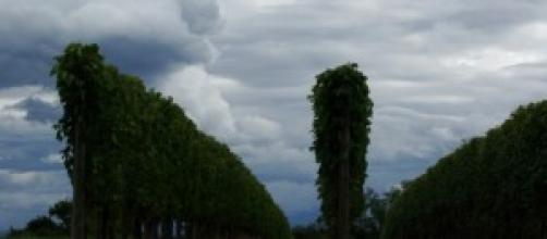 Le vignoble, vignes nobles de Jurançon