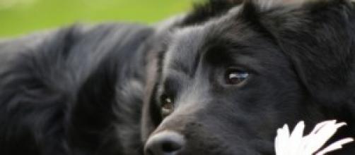 il cane, l'amico fedele per sempre