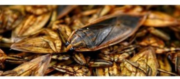 1 din 3 oameni mănâncă insecte comestibile