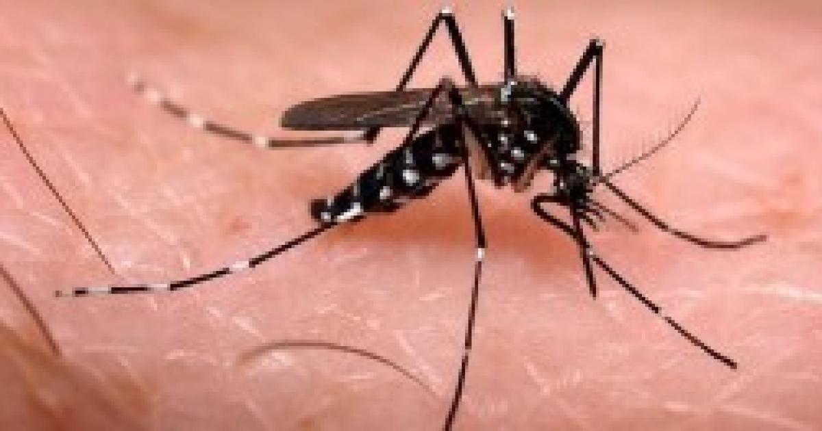 Punture zanzare come evitare di essere punti rimedi for Pesci da laghetto mangia zanzare
