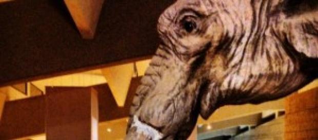 L'elefante Orlando, mascotte del Museo Paleolitico