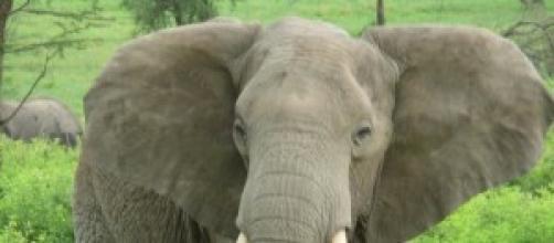 Elefante africano en medio de un bosque