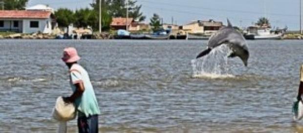 golfinho e pescadores de tarrafa em Laguna
