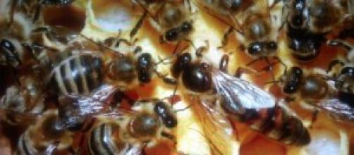 alveare di api mentre producono miele