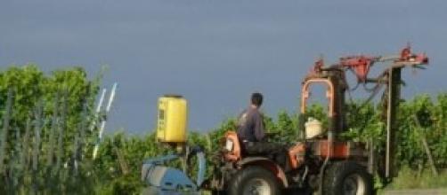 Agricoltura: incentivi per i giovani agricoltori