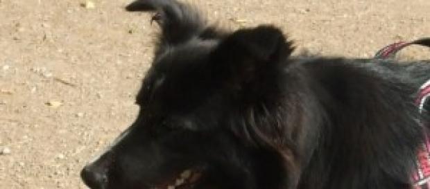 Cani in spiaggia: interviene il Tar