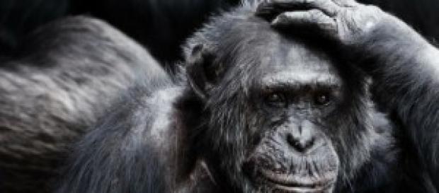 Una scimmia può cambiare la storia del copyright?