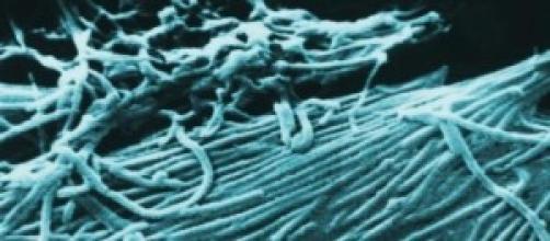 Scongiurato il pericolo ebola