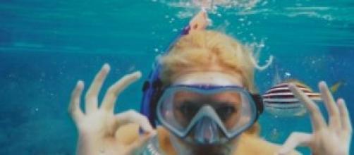 Zilla seems to enjoy snorkeling in the ocean.