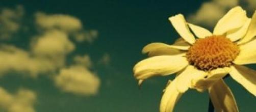 Como uma flor vive e morre uma mulher.