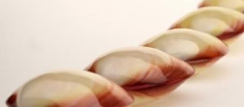 LavaShells, il massaggio con le conchiglie