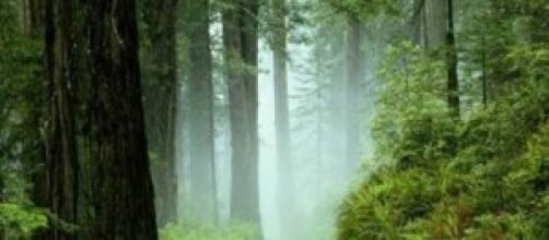 fotografía de un bosque verde y precioso