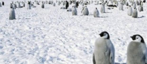 imagem de pinguins na Antártica
