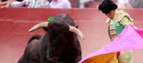 Toro y torero en una corrida