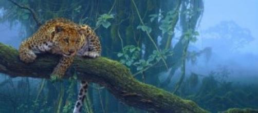 Leopardo delle foreste tropicali