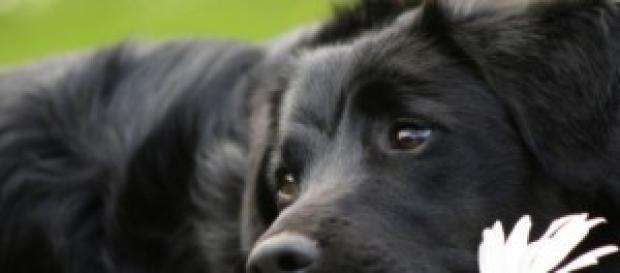 Un cagnolino di adozione in un rifugio