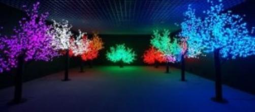 esempio di alberi lampione