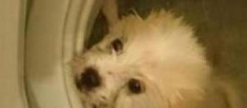 Cane in lavatrice - Dal profilo Fb dell'autore