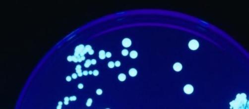 Bactéria Legionella marcou o ano de 2014.