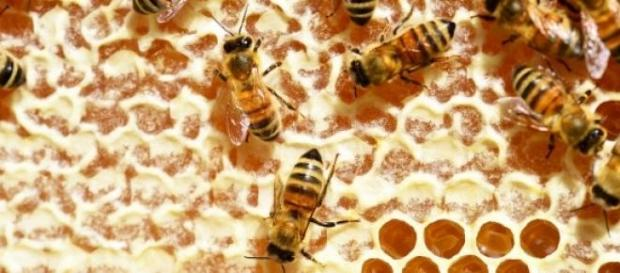 Benefícios dos produtos da colmeia