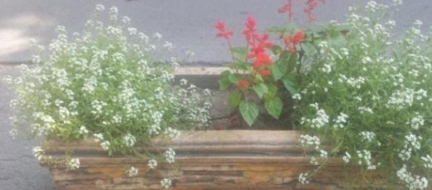Ghivece de flori ornate frumos