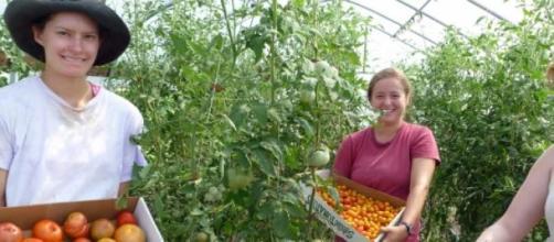 Tomates procedentes de agricultura ecológica