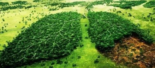 Il Verde è il polmone della Terra.