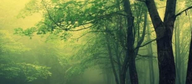 Padurea Baciu, o padure controversata