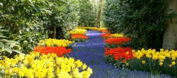 peisaj de florii,o adevarata frumusete