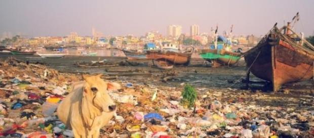 Vache parmi les déchêts. Bombay. Antoine Dessart.