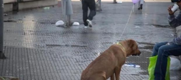 O animal de rua é dócil, meigo e muito amigo