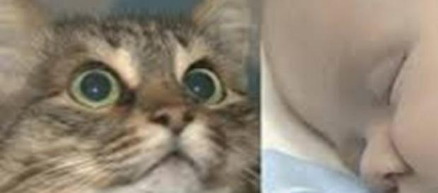 La gatita rescatadora Masha