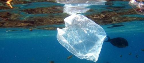Miles de kilómetros cuadrados de basura en el mar