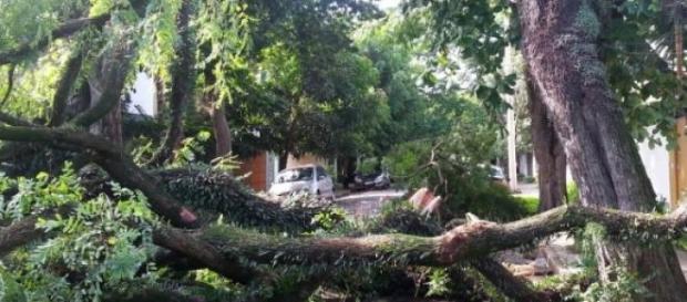 Árvores gigantescas não resistem ao temporal