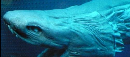 Es uno de los animales marinos más extraños