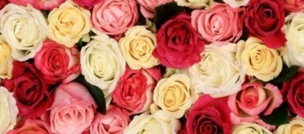 trandafirii erau numiti in limba latina rose