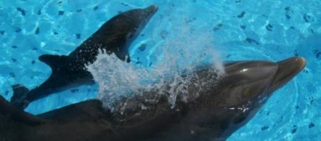 Golfinhos roazes: investigação para salvar crias