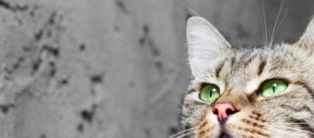 pisica, iubire, alimentatie