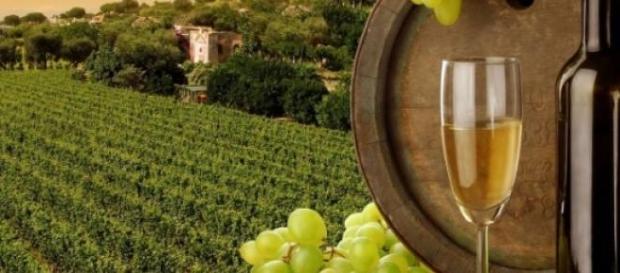 Ceptura, regina vinurilor de calitate