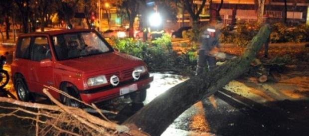 Árvores caem devido a chuva e vento forte em B.H.